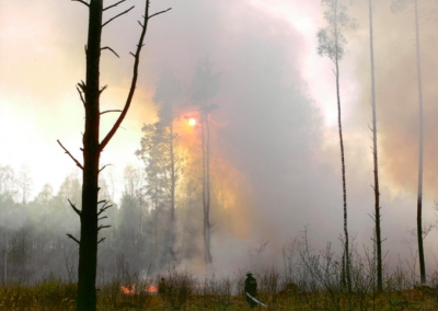 Meža ugunsgrēki